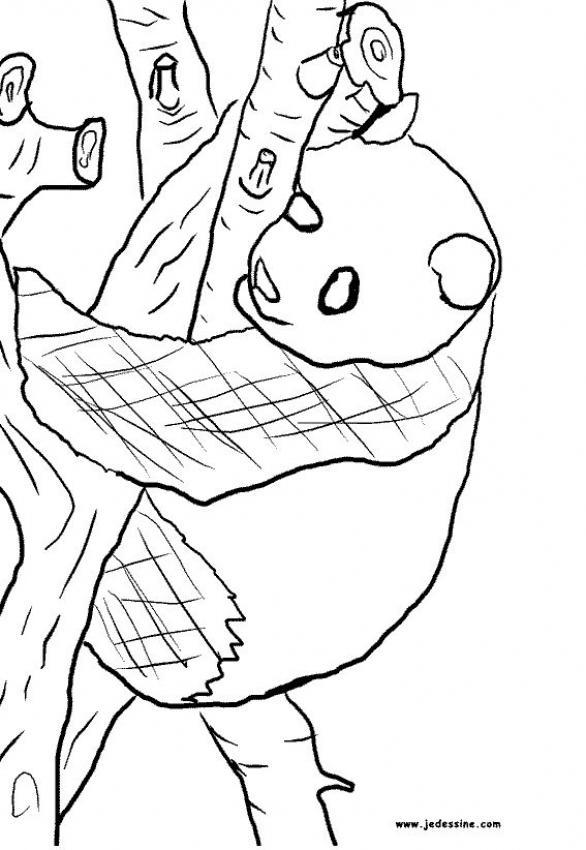 Dibujos para colorear un panda - es.hellokids.com