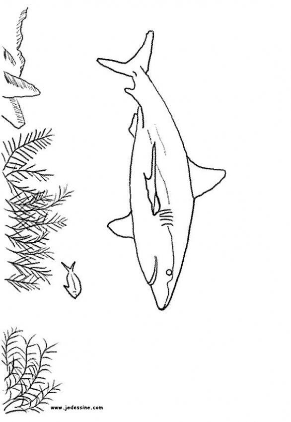 Dibujo para colorear : Tiburón Limón