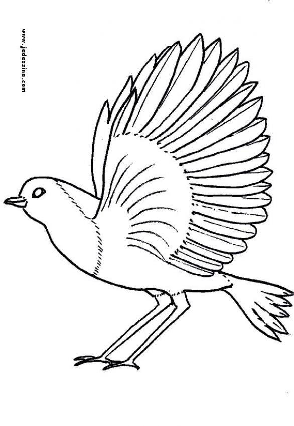 Dibujos para colorear una paloma - es.hellokids.com