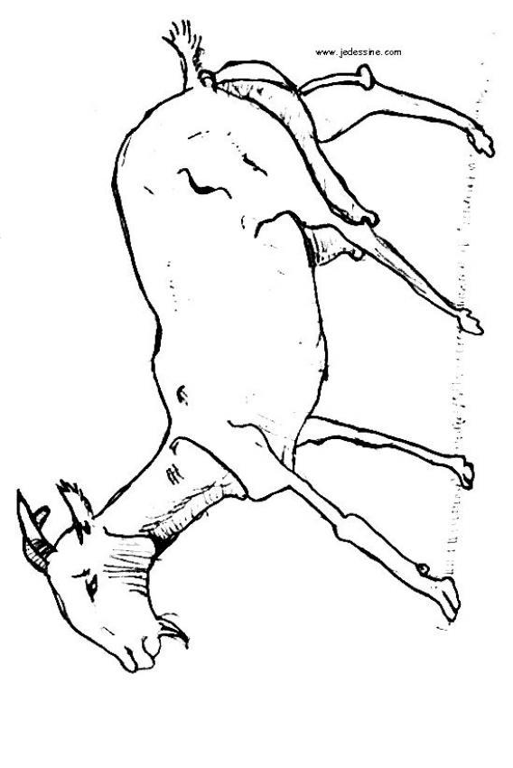 cabra para pintar