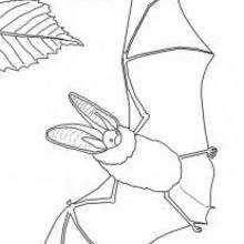 Dibujo para colorear : Detalles de un murciélago