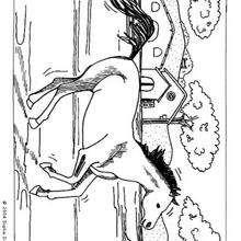 Dibujo de un caballo Mustang - Dibujos para Colorear y Pintar - Dibujos para colorear ANIMALES - Colorear CABALLOS - Colorear CABALLOS MUSTANG