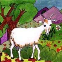 Cabra - Dibujar Dibujos - Imagenes para niños - Imagenes ANIMALES