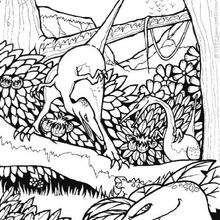 Dinosaurios eudimorphodon - Dibujos para Colorear y Pintar - Dibujos para colorear ANIMALES - Dibujos para colorear DINOSAURIOS - Dibujos para colorear dinosaurio PTERODACTILO