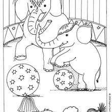 Dibujo elefante acróbata - Dibujos para Colorear y Pintar - Dibujos infantiles para colorear - Circo para colorear