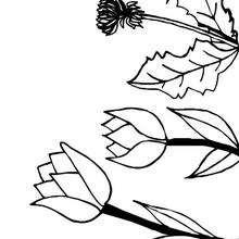 Flor N°11 - Dibujos para Colorear y Pintar - LA NATURALEZA: dibujos para colorear - Dibujos de FLORES para pintar