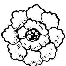 Flor N°18 - Dibujos para Colorear y Pintar - LA NATURALEZA: dibujos para colorear - Dibujos de FLORES para pintar