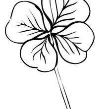 Flor N°2 - Dibujos para Colorear y Pintar - LA NATURALEZA: dibujos para colorear - Dibujos de FLORES para pintar