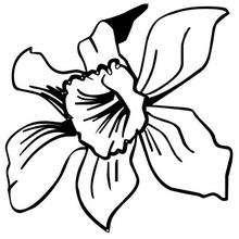 Flor N°22 - Dibujos para Colorear y Pintar - LA NATURALEZA: dibujos para colorear - Dibujos de FLORES para pintar