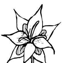 Flor N°23 - Dibujos para Colorear y Pintar - LA NATURALEZA: dibujos para colorear - Dibujos de FLORES para pintar