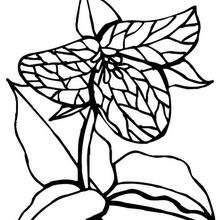 Flor N°5 - Dibujos para Colorear y Pintar - LA NATURALEZA: dibujos para colorear - Dibujos de FLORES para pintar