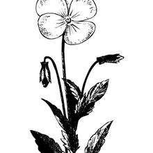 Flor N°6 - Dibujos para Colorear y Pintar - LA NATURALEZA: dibujos para colorear - Dibujos de FLORES para pintar