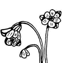 Flor N°7 - Dibujos para Colorear y Pintar - LA NATURALEZA: dibujos para colorear - Dibujos de FLORES para pintar