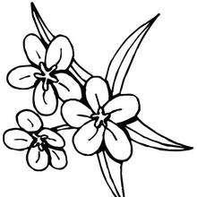 Flor N°8 - Dibujos para Colorear y Pintar - LA NATURALEZA: dibujos para colorear - Dibujos de FLORES para pintar