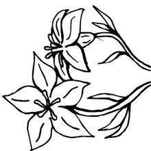 Flor N°9 - Dibujos para Colorear y Pintar - LA NATURALEZA: dibujos para colorear - Dibujos de FLORES para pintar