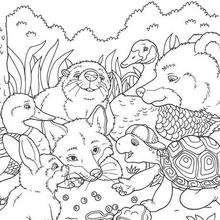 Franklin 41 - Dibujos para Colorear y Pintar - Dibujos para colorear PERSONAJES - PERSONAJES ANIME para colorear - Franklin la tortuga para pintar