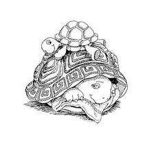 Franklin 43 - Dibujos para Colorear y Pintar - Dibujos para colorear PERSONAJES - PERSONAJES ANIME para colorear - Franklin la tortuga para pintar