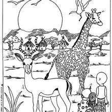 Dibujo de una JIRAFA - Dibujos para Colorear y Pintar - Dibujos para colorear ANIMALES - Dibujos ANIMALES SALVAJES para colorear - Dibujos ANIMALES DE LA SABANA para colorear - Colorear JIRAFA