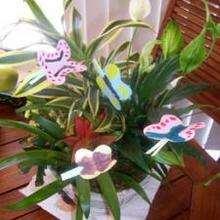 Manualidad infantil : La planta de las mariposas