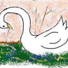 Ilustración : Lágrimas del cisne