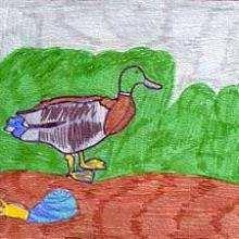 Ilustración : El pato