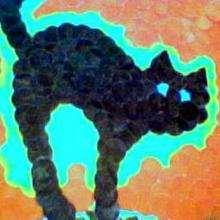 El gato de catkara - Dibujar Dibujos - Dibujos de NIÑOS - Dibujos de ANIMALES - Dibujos de  animales por ORDENADOR