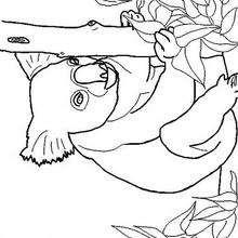 Dibujo de un koala - Dibujos para Colorear y Pintar - Dibujos para colorear ANIMALES - Dibujos ANIMALES SALVAJES para colorear - Dibujos para colorear e imprimir ANIMALES SALVAJES - Colorear KOALA