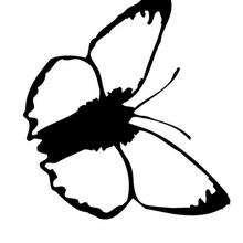 Colorear una mariposa azul sencilla - Dibujos para Colorear y Pintar - Dibujos para colorear ANIMALES - Dibujos INSECTOS para colorear - Dibujos para colorear MARIPOSAS - Colorear MARIPOSA AZUL