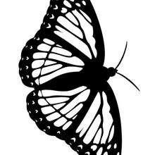 Una mariposa para pintar - Dibujos para Colorear y Pintar - Dibujos para colorear ANIMALES - Dibujos INSECTOS para colorear - Dibujos para colorear MARIPOSAS - Pintar MARIPOSAS