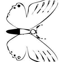 Dibujo para colorear : Mariposa morada