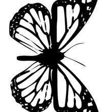 Dibujo de mariposa monarca para colorear - Dibujos para Colorear y Pintar - Dibujos para colorear ANIMALES - Dibujos INSECTOS para colorear - Dibujos para colorear MARIPOSAS - Colorear MARIPOSA MONARCA