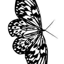 Dibujo de una mariposa para pintar - Dibujos para Colorear y Pintar - Dibujos para colorear ANIMALES - Dibujos INSECTOS para colorear - Dibujos para colorear MARIPOSAS - Pintar MARIPOSAS