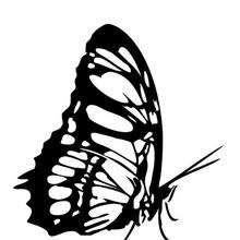Hermosa mariposa monarca