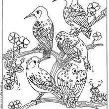 Dibujo de unos pájaros - Dibujos para Colorear y Pintar - Dibujos para colorear ANIMALES - Dibujos PAJAROS para colorear - Dibujos para pintar PAJAROS