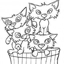 La cesta de los gatos - Dibujos para Colorear y Pintar - Dibujos para colorear ANIMALES - Dibujos GATOS para colorear - Dibujos para colorear GATITOS