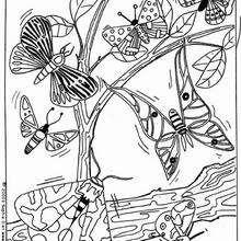 Colorear mariposas moradas en un árbol - Dibujos para Colorear y Pintar - Dibujos para colorear ANIMALES - Dibujos INSECTOS para colorear - Dibujos para colorear MARIPOSAS - Colorear MARIPOSA MORADA