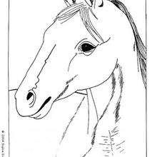 Retrato de caballo para colorear - Dibujos para Colorear y Pintar - Dibujos para colorear ANIMALES - Colorear CABALLOS - Dibujos de CABALLOS para colorear e imprimir