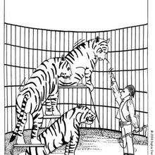 Dibujo tigres - Dibujos para Colorear y Pintar - Dibujos infantiles para colorear - Circo para colorear