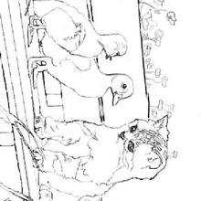 Dibujo para colorear : Un gato y un pato