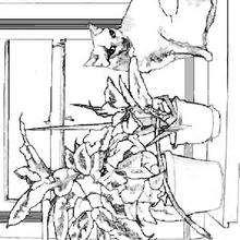 Un gato en la ventana - Dibujos para Colorear y Pintar - Dibujos para colorear ANIMALES - Dibujos GATOS para colorear - Dibujos para colorear e imprimir GATOS