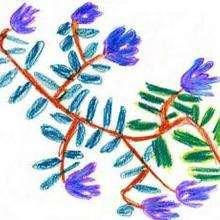 Una flor - Dibujar Dibujos - Dibujos de NIÑOS - Dibujos de la NATURALEZA